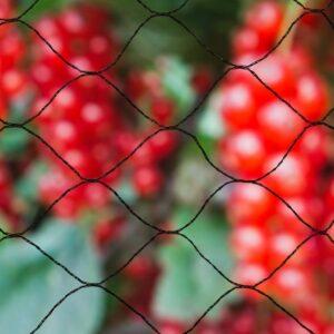 Nature Vogelschutznetz Primo 10×4 m Schwarz 6030406